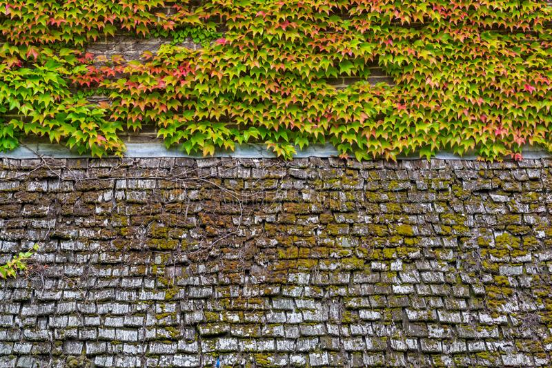 Old wood roof surface with green moss on it background texture royalty free stock photography