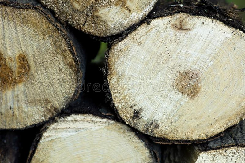 Old wood sawn into several parts. The tree is sawn into several pieces and folded into a pile royalty free stock image