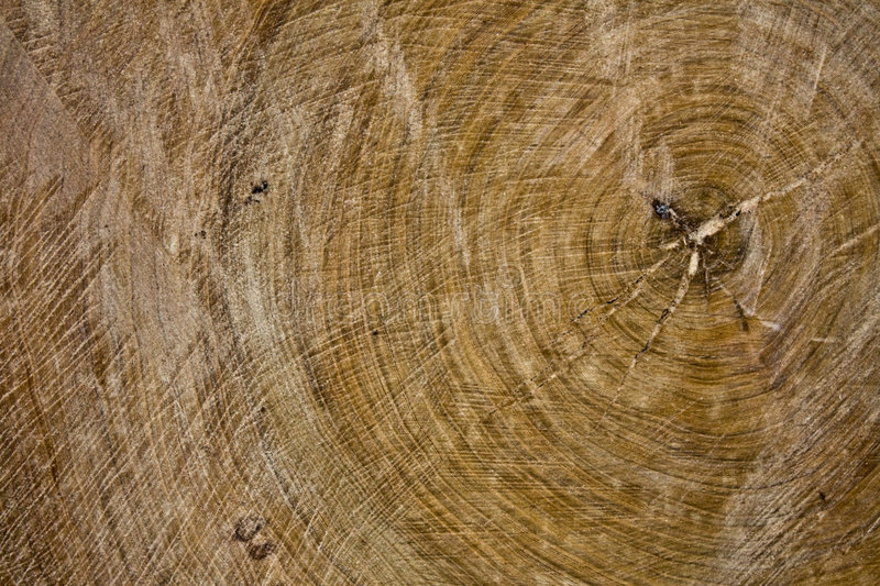 Download Old Wood Slice Texture Royalty Free Stock Photography - Image: 6963067