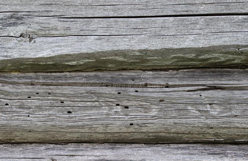 Old wood spoiled by bark beetle royalty free stock photo