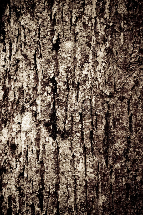Free Old Wood Texture Royalty Free Stock Photo - 4411245