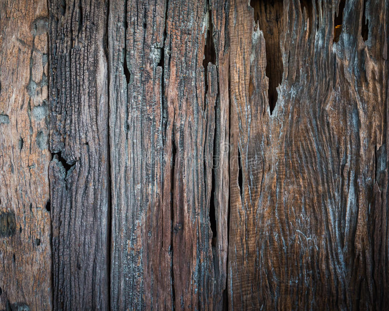Old wood texture. Texture of bark wood use as natural background, Abstract background stock photos