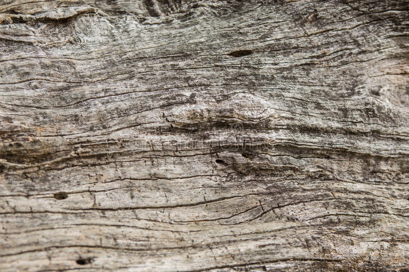 Old wood texture, Natural wood surface, ideal for backgrounds. Old wood texture, Natural wood surface stock images