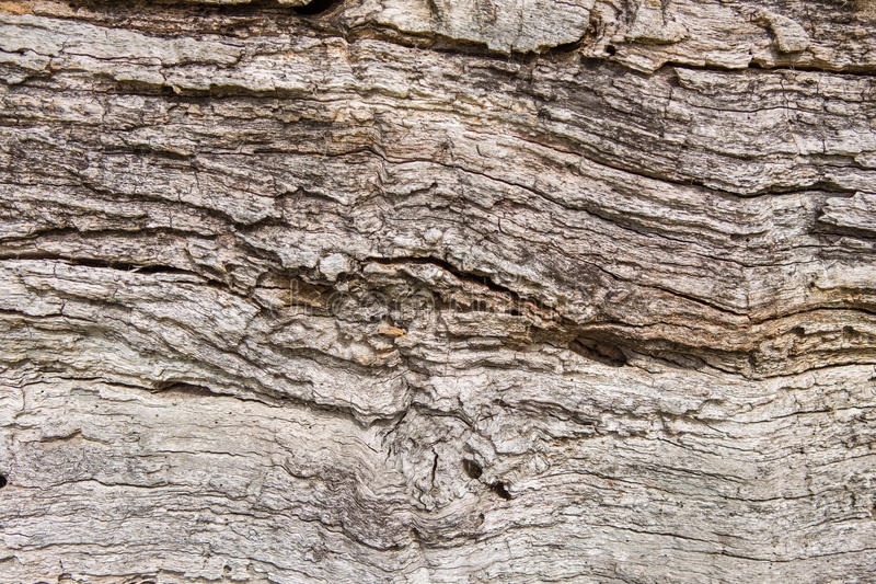Old wood texture, Natural wood surface, ideal for backgrounds. Old wood texture, Natural wood surface royalty free stock photos