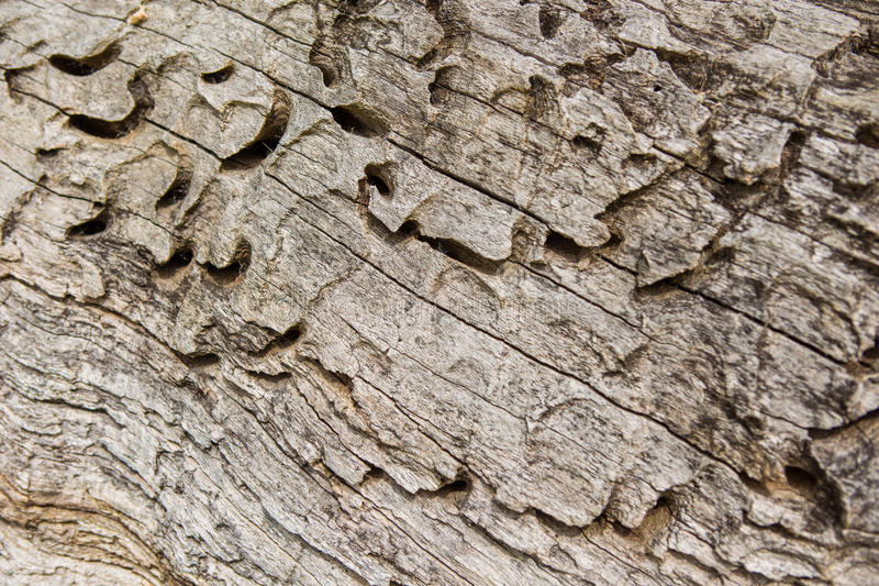 Old wood texture, Natural wood surface, ideal for backgrounds. Old wood texture, Natural wood surface stock photos