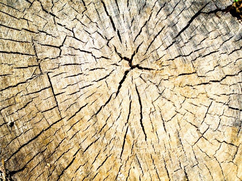 Old wood texture of tree stump stock photo