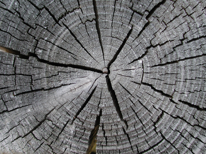 Old Wood Tree Rings Texture. An old tree stump reveals it's age with faded gray tones and cracks. A very detailed close up macro useful as a background or stock photos