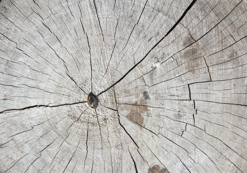 Old Wood Tree Rings Texture. stock photography