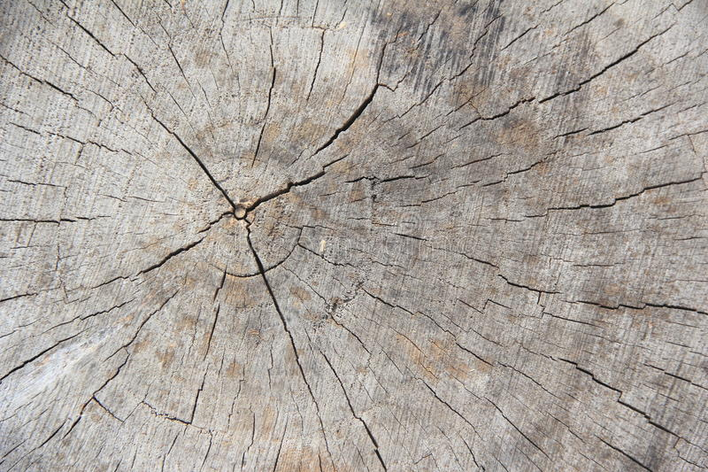 Old Wood Tree Rings Texture-2. royalty free stock photo