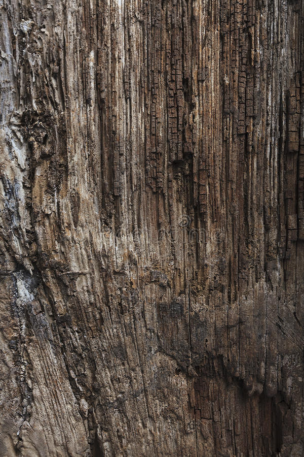 Old Wood Tree Texture Background Pattern. stock photography