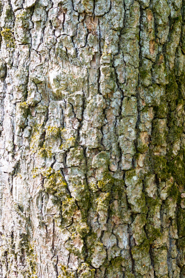 Old Wood Tree Texture Background Pattern stock image