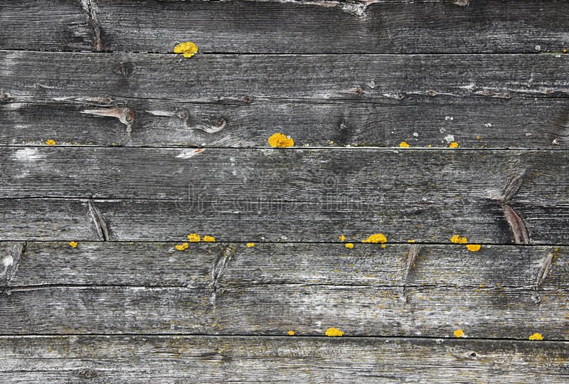 Old wood stock photo
