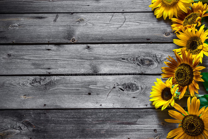 Old wooden background with sunflowers. royalty free stock photo