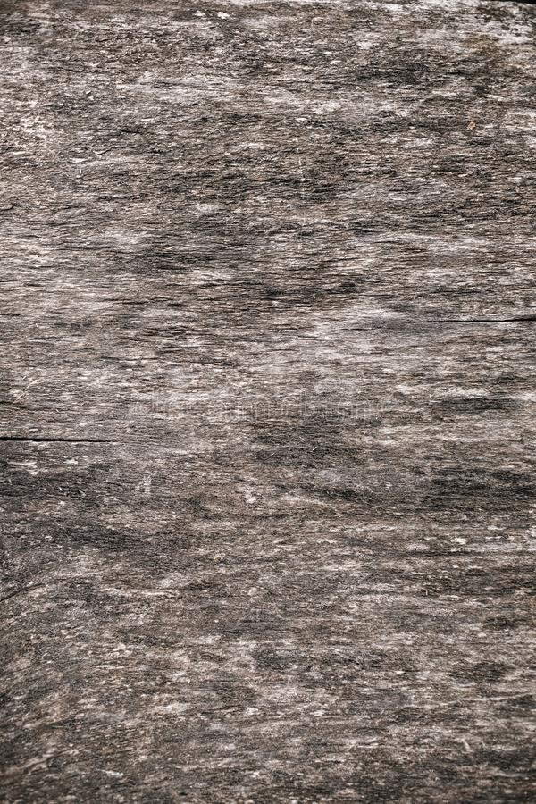 Old wooden background. Wood background Black and White soft wood surface texture high quality close up stock photography