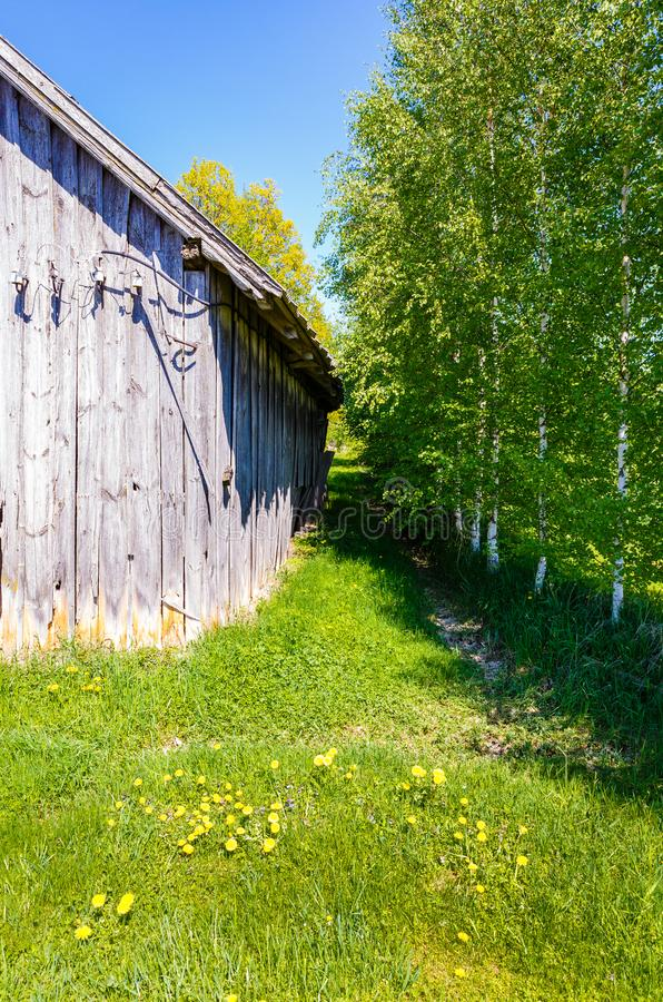 Old wooden barn with gray boards. That are naturally obsolete under the influence of the atmosphere; in the queue, birches are drawn next to the barn royalty free stock images