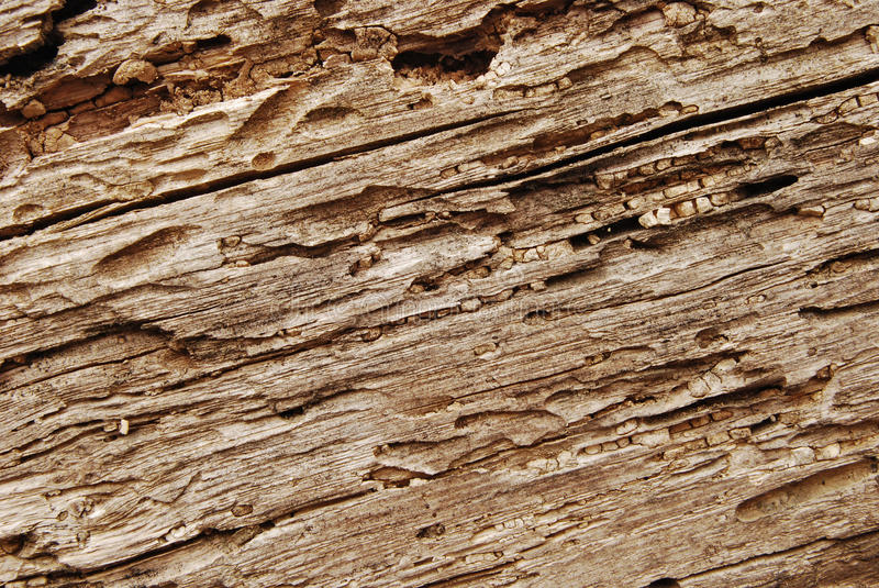 Download Old wooden beam closeup stock image. Image of texture - 24374405
