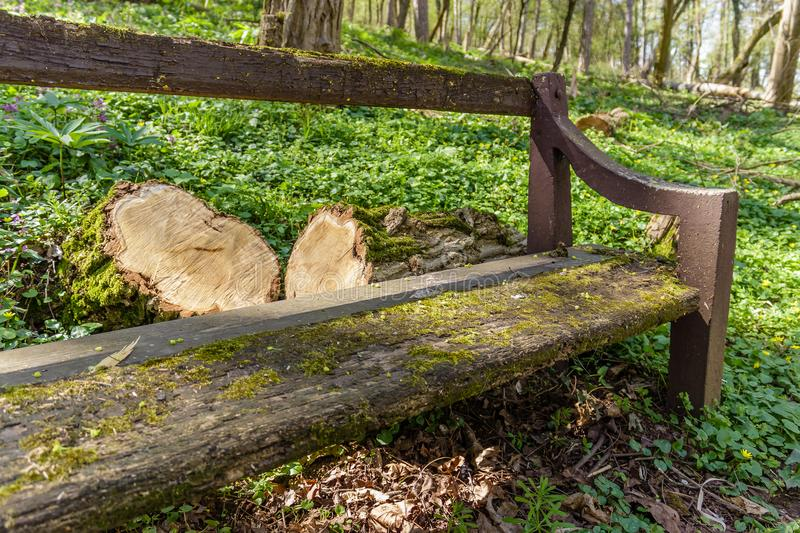 Old wooden bench covered with moss, trunk and stump beside her o stock images