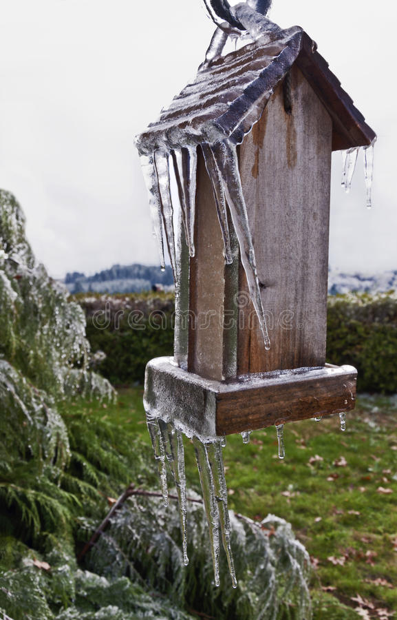Old Wooden Bird feeder with icicles hanging from post. Next to cedar tree stock photography