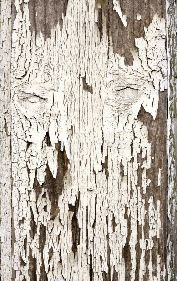Old wooden board. With flaked white paint royalty free stock photos