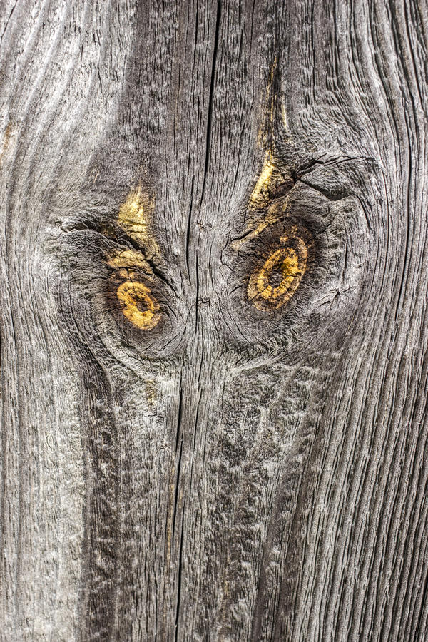 Old wooden board with knots like eyes of an owl. Old pine wooden board with two yellow knots like the surprised eyes and face of an owl stock photography