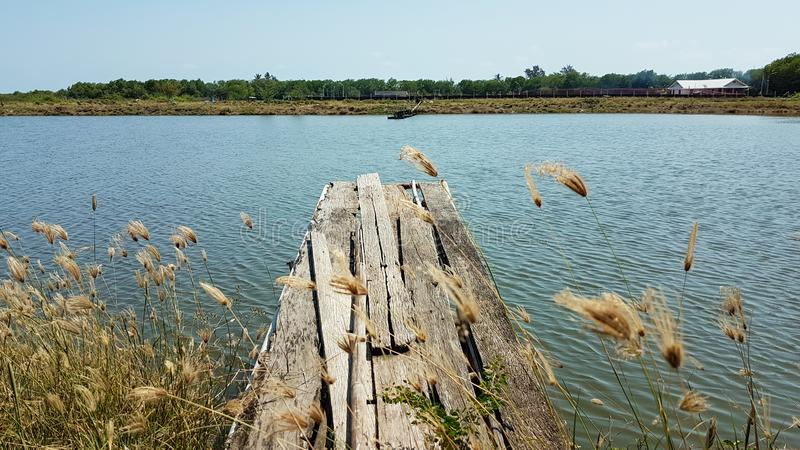 Old wooden bridge on the bank of the pond. Around with spread grasses stock image