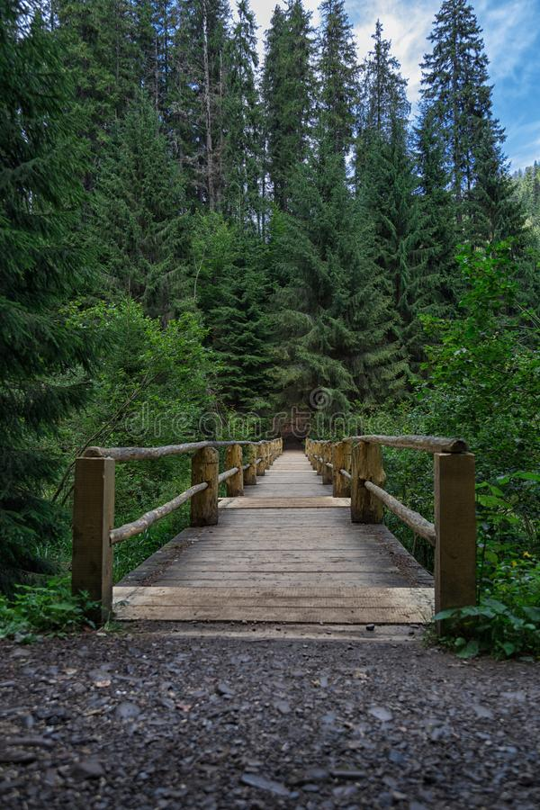 Old wooden bridge in green coniferous forest. Idyllic lonely place near lake Synevyr in Carpathian mountains, Ukraine. Sunny summer day. Vertical orientation stock images