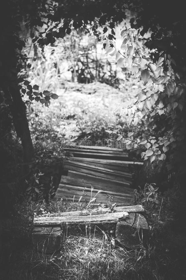 Old wooden bridge, surrounded by trees. Monochrome photo with an old style with a wooden bridge, surrounded by trees stock images