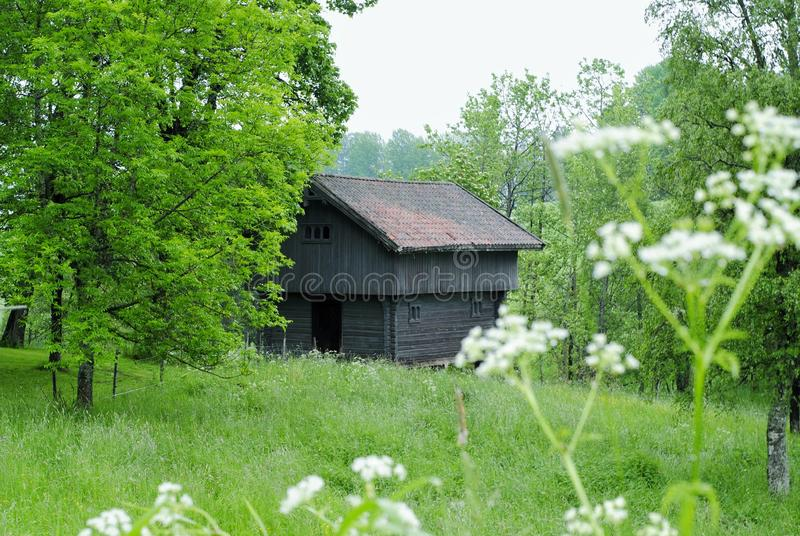 Old wooden cottage in the midst of greenery royalty free stock photography