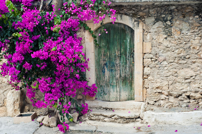 Old wooden door and bougainvillea. On Crete stock photo