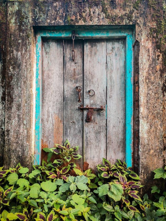Old vintage wooden door with metal handles and lock and bushes grown in front of door stock images