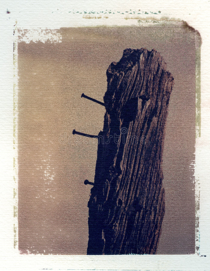 Old wooden fence post with nails royalty free stock images