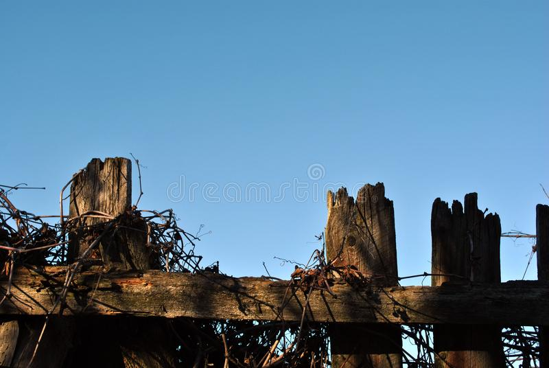 Old wooden fence silhouette with sun lights on it with dry branches of wild grape. On a background of blue sky royalty free stock photos