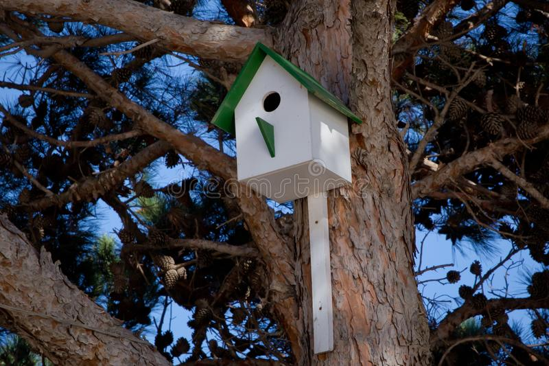 Old wooden green birdhouse attached to a tree in winter time. Wintering place for birds . Bird house hanging from the tree with th royalty free stock photos