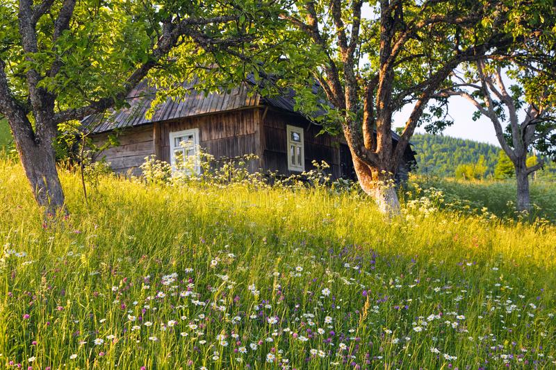 An old wooden house. Majestic spring sunny landscape. Garden with fruit trees, flowers, forest. Eco resort, relax for tourists. stock photography
