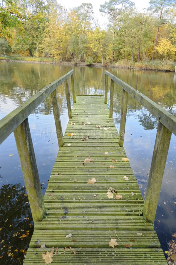 Old wooden jetty on an autumn day. fall leaves and vanishing point. An old wooden jetty over a lake with autumn leaves and tree reflection, knebworth royalty free stock image