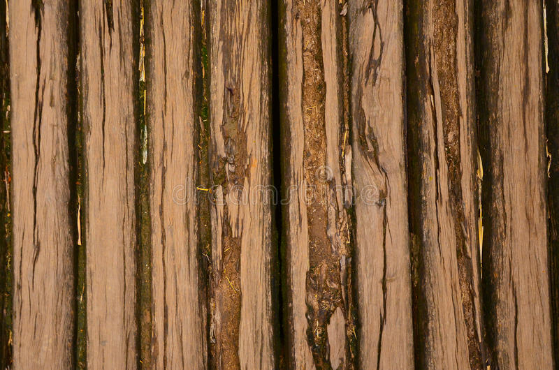 Old wooden logs floor with mos of rural house royalty free stock photography