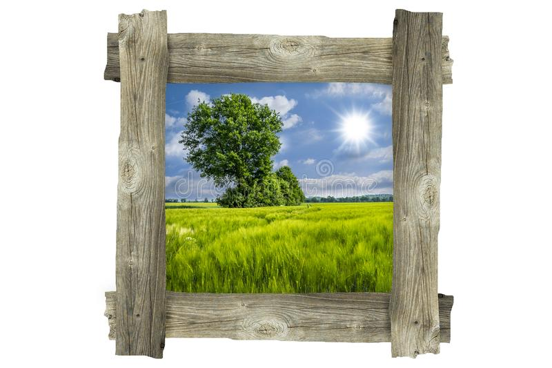 Old wooden photo frame - Corn field and tree stock photography