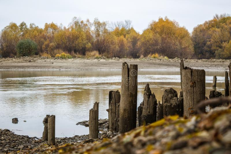 Old wooden piles from the destroyed pier on the shore. In the background are autumn trees stock photography
