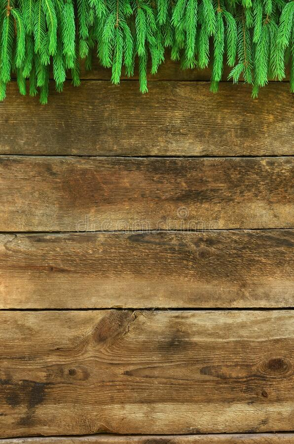 Old wooden planks and evergreen branch stock photos