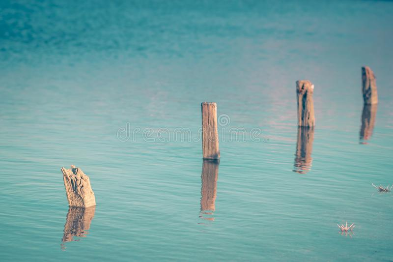 Old wooden poles in a lake. 