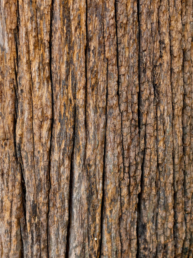 Old wooden poles. stock image