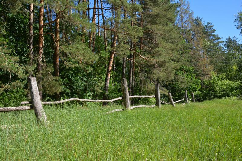 Old wooden rural fence near pine trees forest. Wooden rural fence near pine trees forest stock image