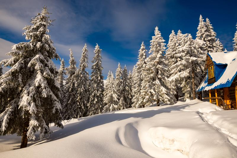 Old wooden shelter among huge fir trees covered with snow royalty free stock image
