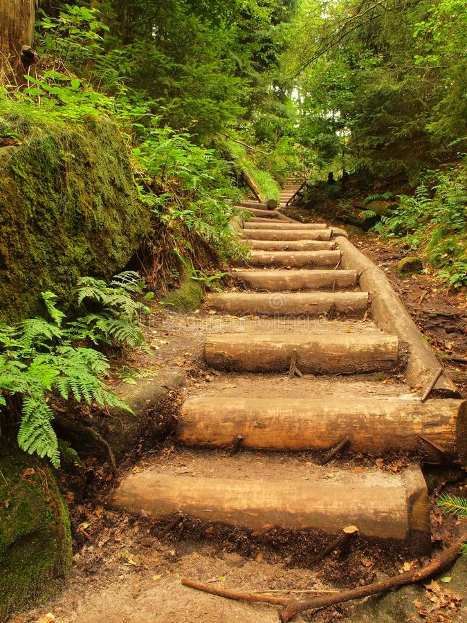 Old wooden stairs in overgrown forest garden, tourist footpath. Steps from cut beech trunks, fresh green branches royalty free stock photos