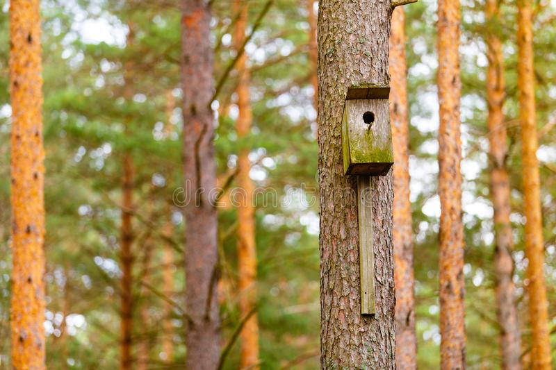 Old wooden starling-house on pine tree macro view. Bird house close-up royalty free stock photography