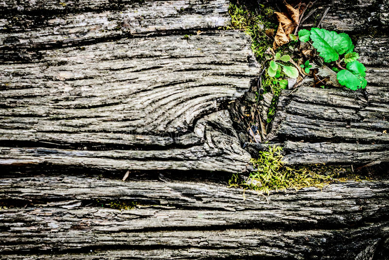Old wooden textural background