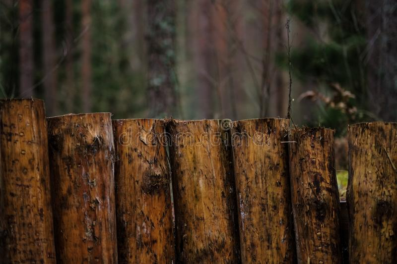 old wooden trenshes in Latvia. reconstruction of first world war royalty free stock image