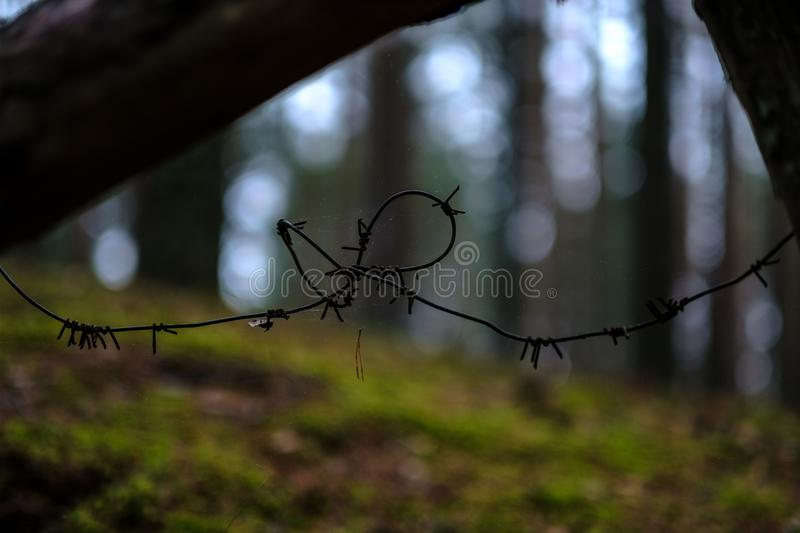 old wooden trenshes in Latvia. reconstruction of first world war royalty free stock photography