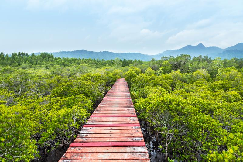 Old wooden walkway bridge in to mangroves forest royalty free stock photo