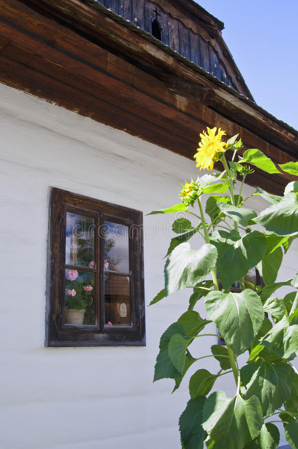 Old wooden window with flower stock photo